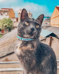 collares de cuero mascotas - Antonina Kadyrova